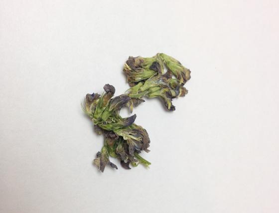 アルファルファ花