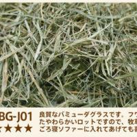 バミューダグラス ロットNO.BG-J01