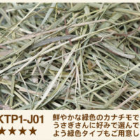 KTP1-J01