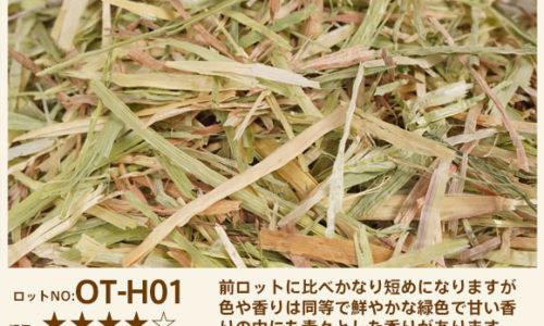 OT-H01