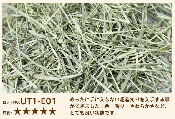 うさチモ1番刈り UT1-E01