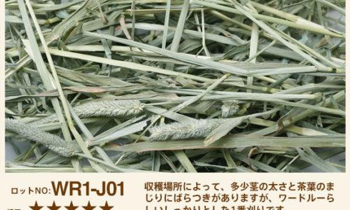 WR1-J03