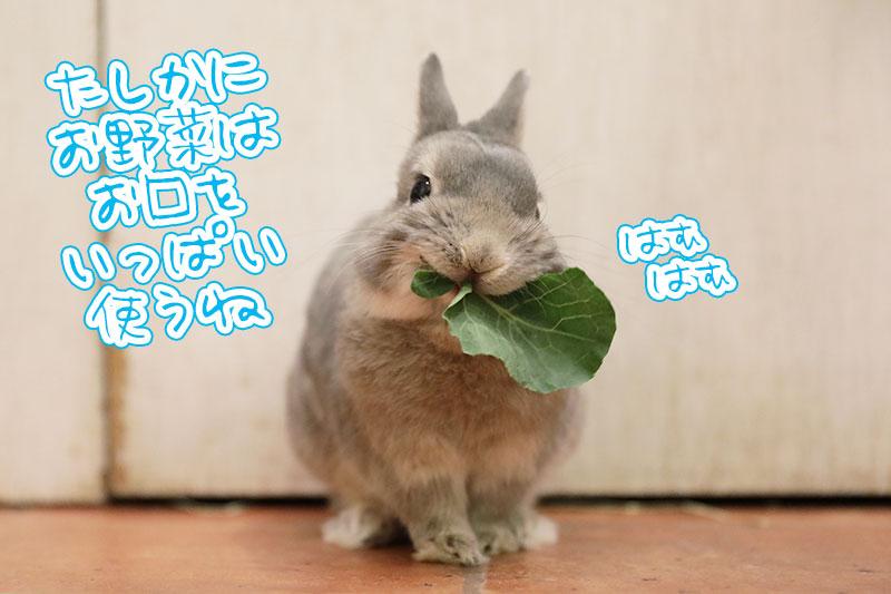 野菜もぐもぐ
