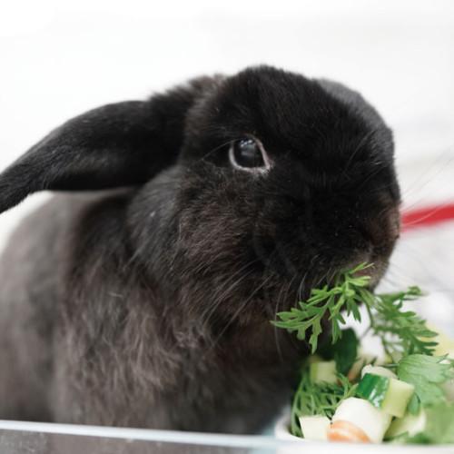 うさぎの野菜