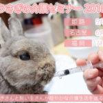 うさぎの介護セミナー 2018 姫路・名古屋・福岡