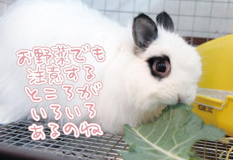 ウサギの野菜の注意