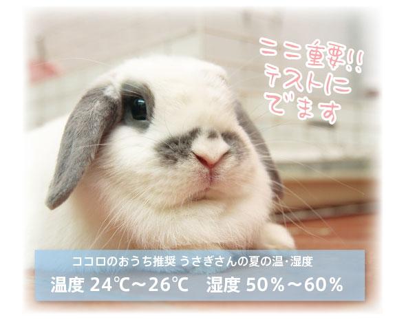 うさぎの最適温度